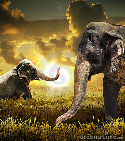 Free Elephants Royalty Free Stock Image - 16510606