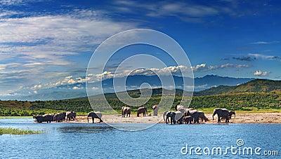 Elephants in african savanna