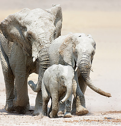 Free Elephants Approaching Royalty Free Stock Photography - 12332287