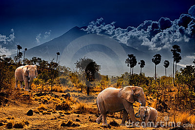 Elephants on background of mountains