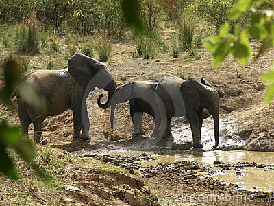 Elephants family at waterhole