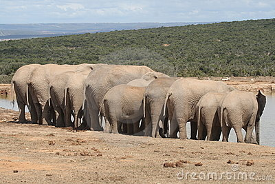 Elephants hanging out.