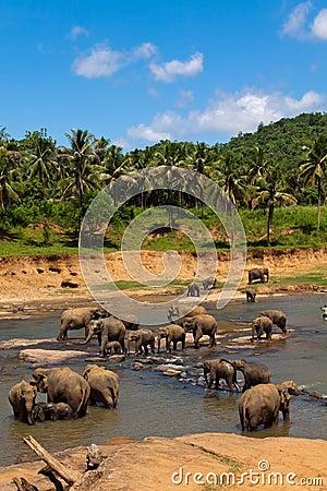 Free Elephants Herd Stock Images - 19988424