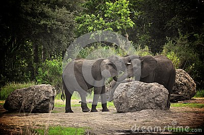 Elephants Kissing