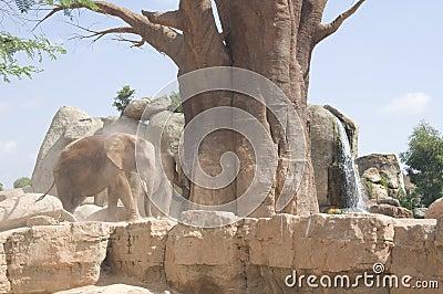 Elephants near an old tree