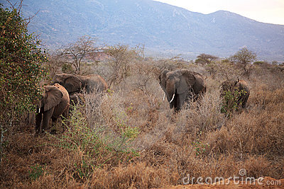 Elephants in Ngulia Rhino sanctuary