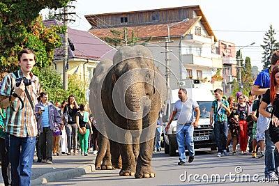 Elephants parade Editorial Stock Image