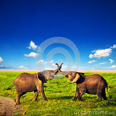 Free Elephants Playing On Savanna. Safari In Amboseli, Kenya, Africa Royalty Free Stock Image - 29222136