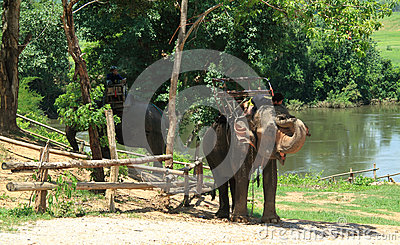 Elephants on rest Editorial Stock Image