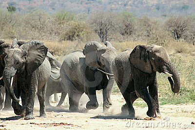 Elephants Run
