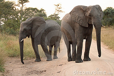 Elephants in the Sabi Sands Private Game Reserve