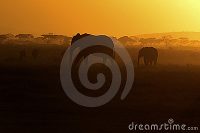 Elephants Silhouetted at Sunset, Africa
