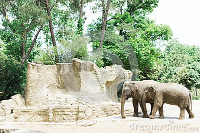 Elephants in a sunny zoo