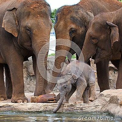 Free Elephants With Calf Stock Photos - 14222933