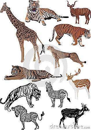Free Eleven Color Animals Set Stock Photos - 11775933
