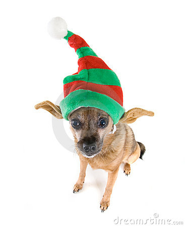 Free Elf Dog Royalty Free Stock Photography - 7110407
