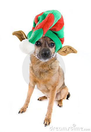 Free Elf Dog Stock Image - 7110421