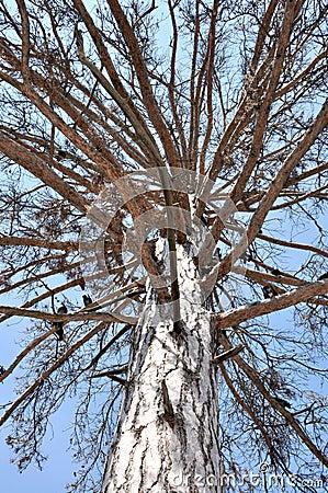Elf s tree