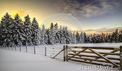 ELGIN - MILLBUIES IN SNOW