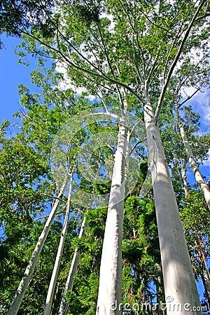 Free Eli Creek, Faser Island, Australia Royalty Free Stock Photos - 3901918
