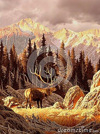 Free Elk Bull Stock Images - 482224