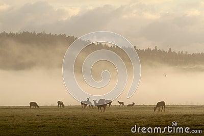 Elk in fog