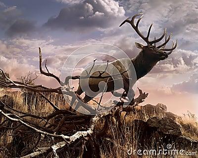 Elk Passage