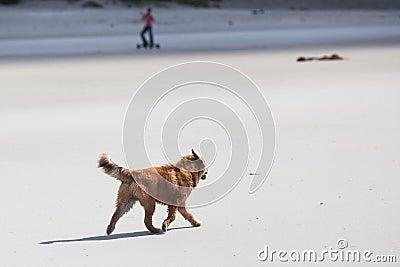 Elo puppy walks along the beach