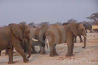 Elphants