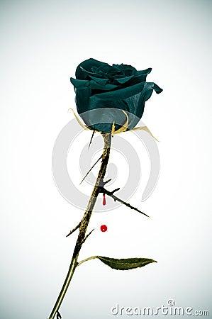 Free Emo Rose Royalty Free Stock Image - 16351936