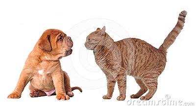 Emotional cat and puppy