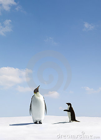 Emperor and Adelie Penguin
