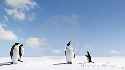 Emperor and Adelie penguins