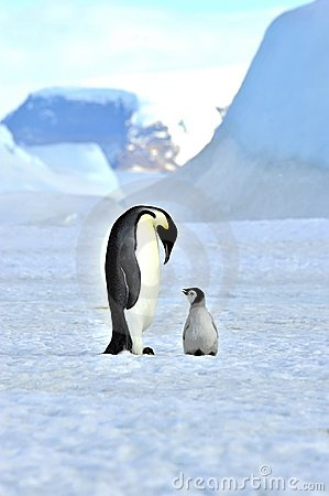 Free Emperor Penguin Royalty Free Stock Images - 16891939
