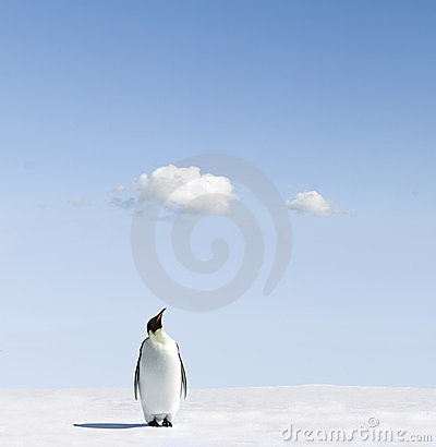Emperor penguin on snowfield