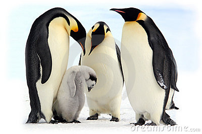 Emperor penguins (Antarctic)