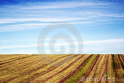 empty agricultural field under blue sky