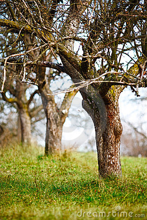 Free Empty Apple Trees In Late November Stock Images - 17092164