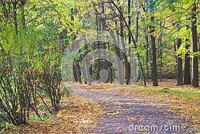 Empty autumn footpath