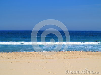 Empty beach with Silver gulls scenery