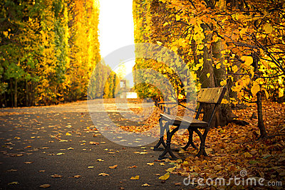 Empty bench in beautiful yellow park scenery