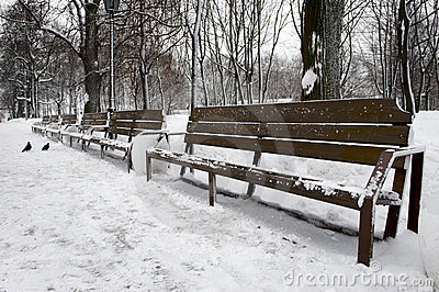 Empty bench in Winter Park