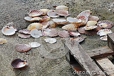 Empty big shells lay on the pier