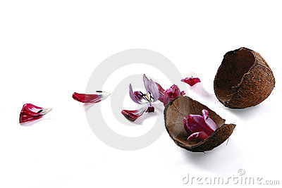 Empty Coconut with petals