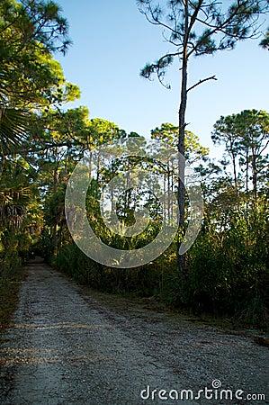 Empty dirt road in florida