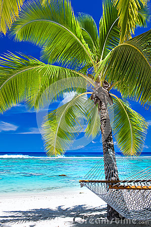 Free Empty Hammock Under Palm Tree On The Beach Royalty Free Stock Photos - 31779108