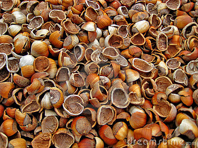 Empty Hazelnut Shells