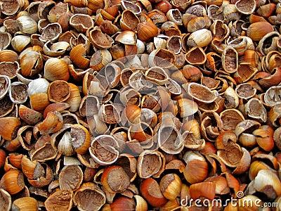 Empty Hazelnut Shells