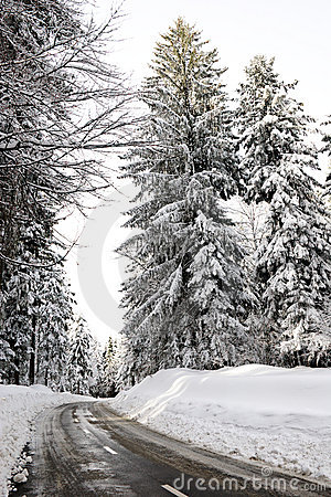 Empty road in the snowbound wood