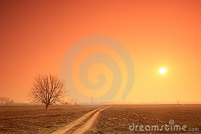 Empty road, tree and the sun at sunset